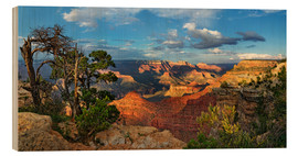 Holzbild  Grand Canyon mit knorriger Kiefer - Michael Rucker