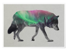Poster  Wolf in Aurora Borealis - Andreas Lie