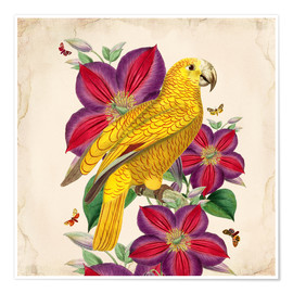 Premium-Poster  Oh My Parrot V - Mandy Reinmuth