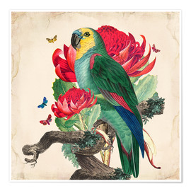 Premium-Poster  Oh My Parrot X - Mandy Reinmuth