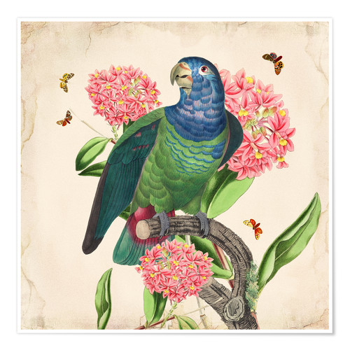Premium-Poster Oh My Parrot IV