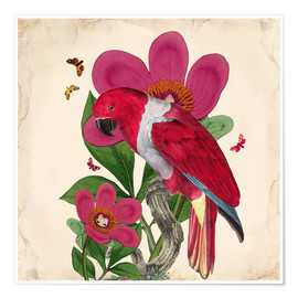 Premium-Poster  Oh My Parrot VI - Mandy Reinmuth