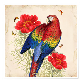 Premium-Poster Oh My Parrot III