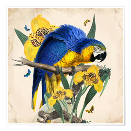 Poster  Oh My Parrot IX - Mandy Reinmuth