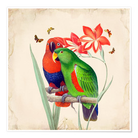 Premium-Poster Oh My Parrot I
