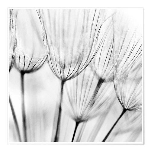 Premium-Poster black and white dandelion