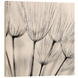 Holzbild  black and white dandelion