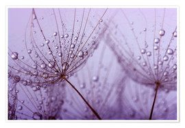 Poster  purple raindrops