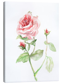 Leinwandbild  Rosa Rose - Verbrugge Watercolor