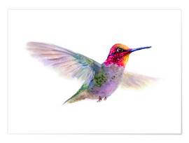 Premium-Poster  Kolibri - Verbrugge Watercolor