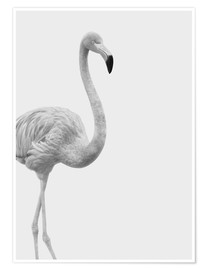 Poster  Flanierender Flamingo - Finlay and Noa