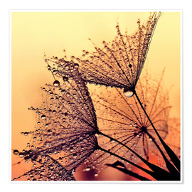 Premium-Poster  Pusteblume Sunset Dream - Julia Delgado