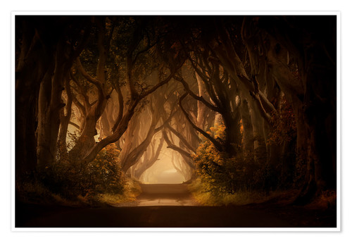 Premium-Poster Sonniger Morgen in Dark Hedges