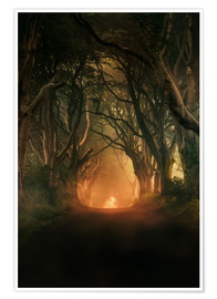 Premium-Poster Dark Hedges in der Morgensonne
