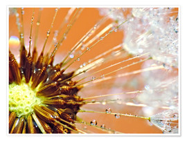 Premium-Poster Pusteblume orange light II