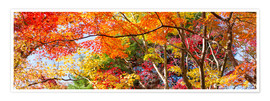 Poster Bunter Wald im Herbst als Panorama