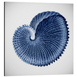 Alubild  Seashell - Mandy Reinmuth