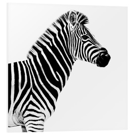 Forex  Safari Profil Collection - Zebra White Edition II - Philippe HUGONNARD