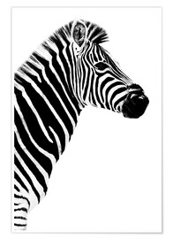 Poster Safari Profil Collection - Zebra White Edition III