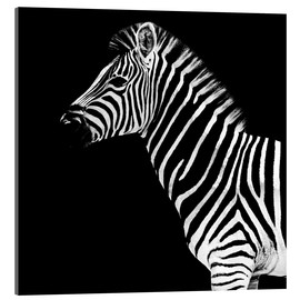 Acrylglas  Safari Profil Collection - Zebra Black Edition II - Philippe HUGONNARD
