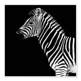 Poster Safari Profil Collection - Zebra Black Edition II