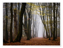 Premium-Poster  Walk Beneath the Yellow Leaves - tvurk photography