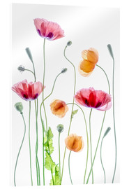 Mandy Disher - Poppy Tanz
