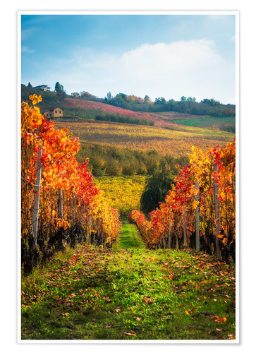 Póster Langhe in Autumn, Italy