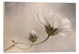 Holzbild  Cosmos Charm - Mandy Disher