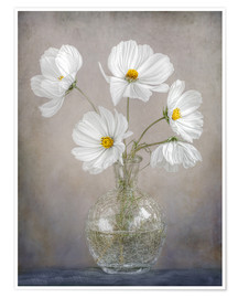Premium-Poster  Cosmos - Mandy Disher