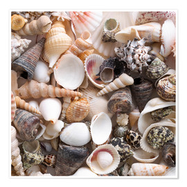 Premium-Poster  Selection of sea shells