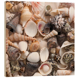 Holzbild  Selection of sea shells