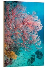 Holzbild  Melithaea sea fan - Georgette Douwma