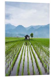 Forex  Small hut in the middle of Padi field in Sumatra, Indonesia, Southeast Asia - John Alexander