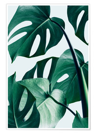 Premium-Poster  Monstera - Uma 83 Oranges