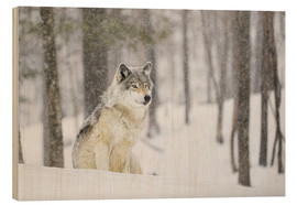 Holzbild  philosophierender Wolf - Dominic Marcoux