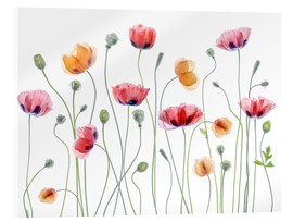 Acrylglasbild  Mohn-Party - Mandy Disher