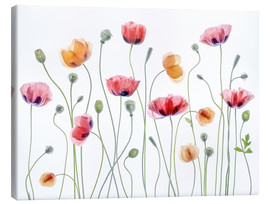 Leinwandbild  Poppy Party - Mandy Disher