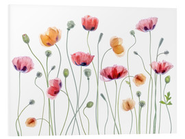 Hartschaumbild  Mohn-Party - Mandy Disher