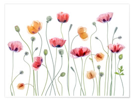 Premium-Poster  Mohn-Party - Mandy Disher