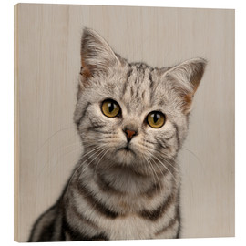 Holzbild  Young silver tabby cat - Simon Murrell