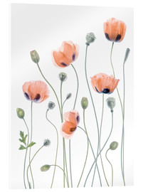 Acrylglasbild  Poppy Poesie - Mandy Disher