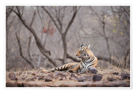 Janette Hill - Bengal-Tiger, Ranthambhore-Nationalpark