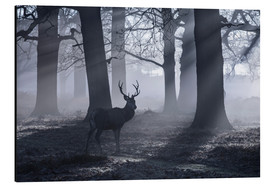 Alubild  A male red deer stag waits in the early morning mists of Richmond park, London. - Alex Saberi