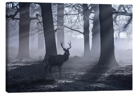 Leinwandbild  A male red deer stag waits in the early morning mists of Richmond park, London. - Alex Saberi