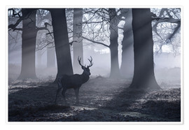 Premium-Poster A male red deer stag waits in the early morning mists of Richmond park, London.