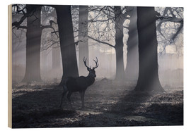 Holzbild  A male red deer stag waits in the early morning mists of Richmond park, London. - Alex Saberi