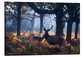 Alubild  A red deer stag in a misty forest in Richmond park, London. - Alex Saberi