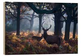 Holzbild  A red deer stag in a misty forest in Richmond park, London. - Alex Saberi