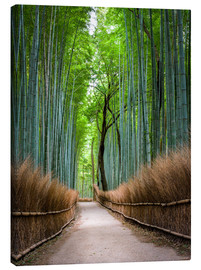 Jan Christopher Becke - Bambus Wald in Kyoto Sagano Arashiyama, Japan
